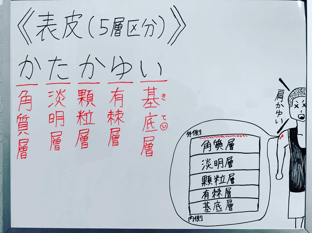 f:id:yakugakun:20200503135902j:plain