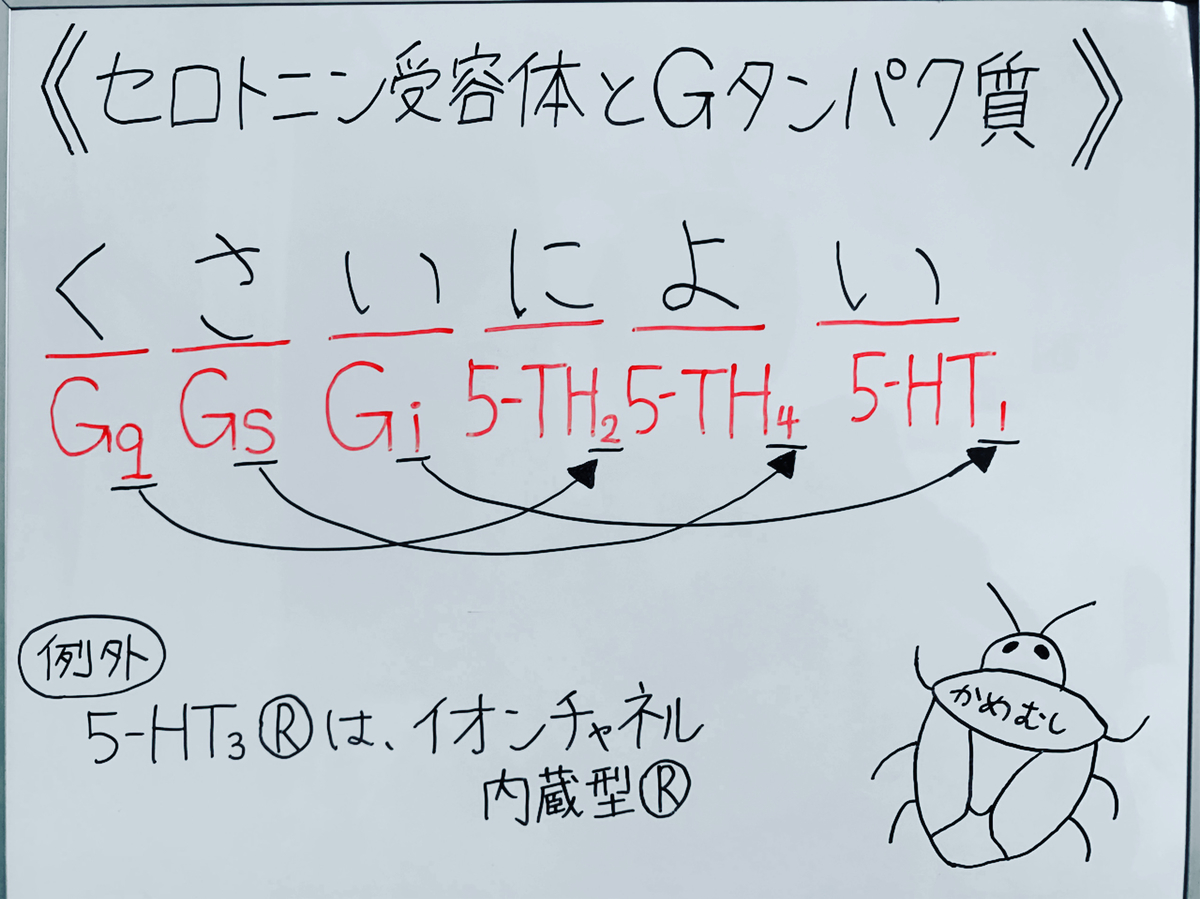 f:id:yakugakun:20200503150447j:plain