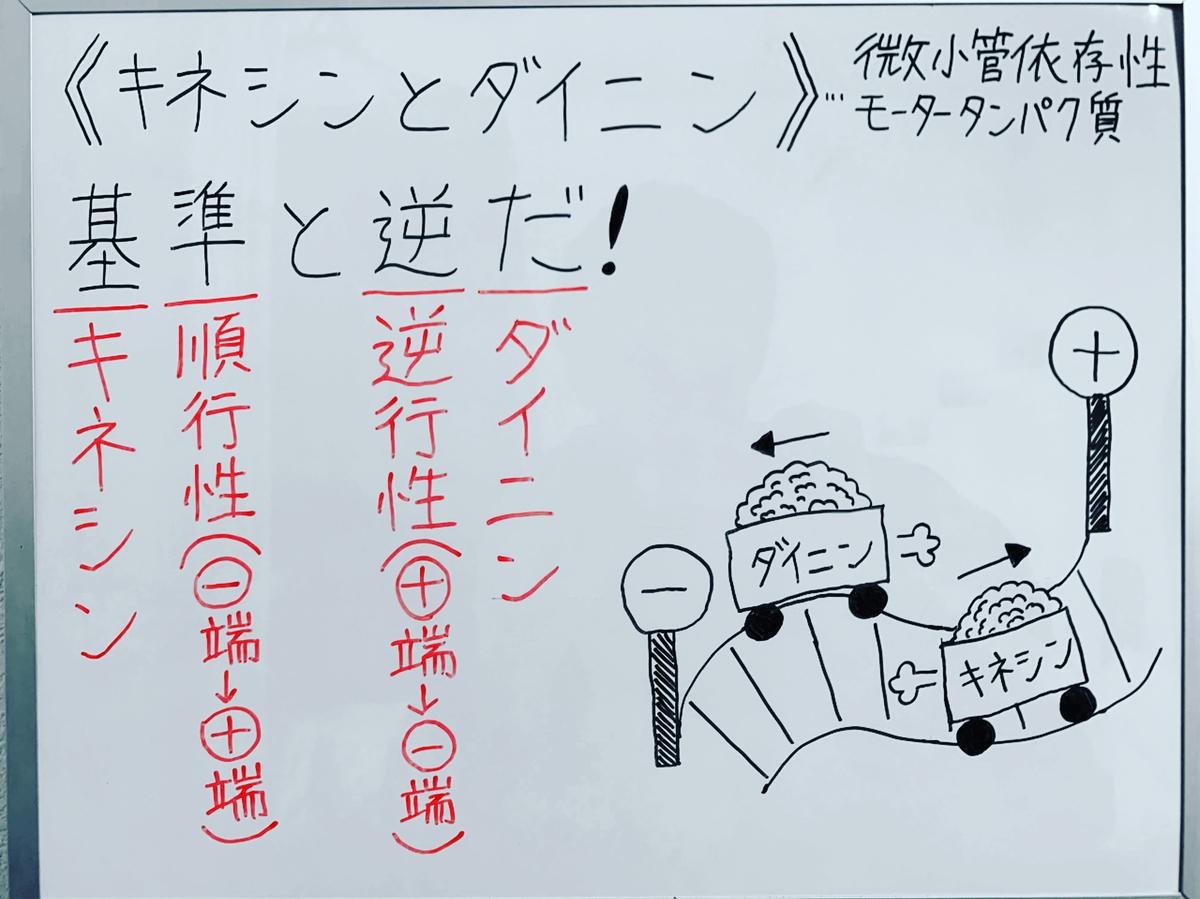 f:id:yakugakun:20200503151238j:plain