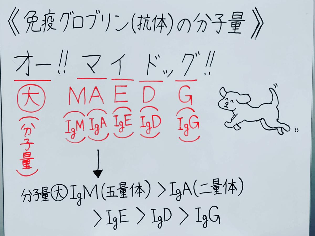 f:id:yakugakun:20200503161814j:plain