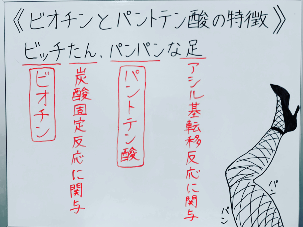 f:id:yakugakun:20200503165353j:plain