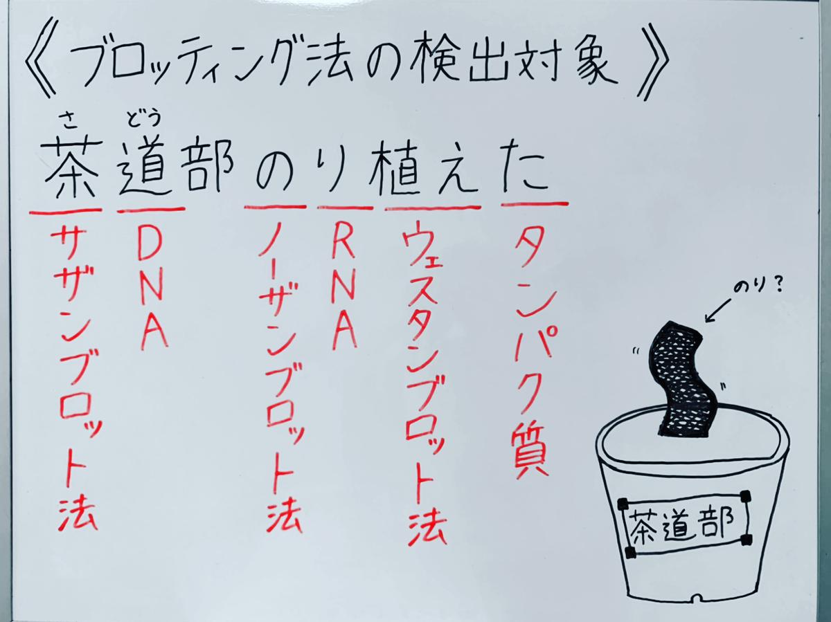 f:id:yakugakun:20200503173452j:plain