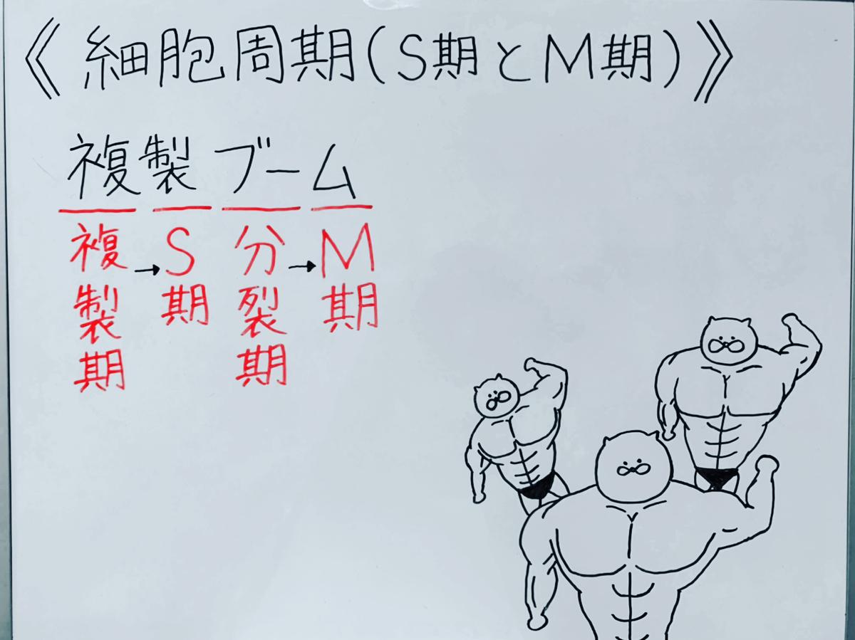 f:id:yakugakun:20200503174836j:plain