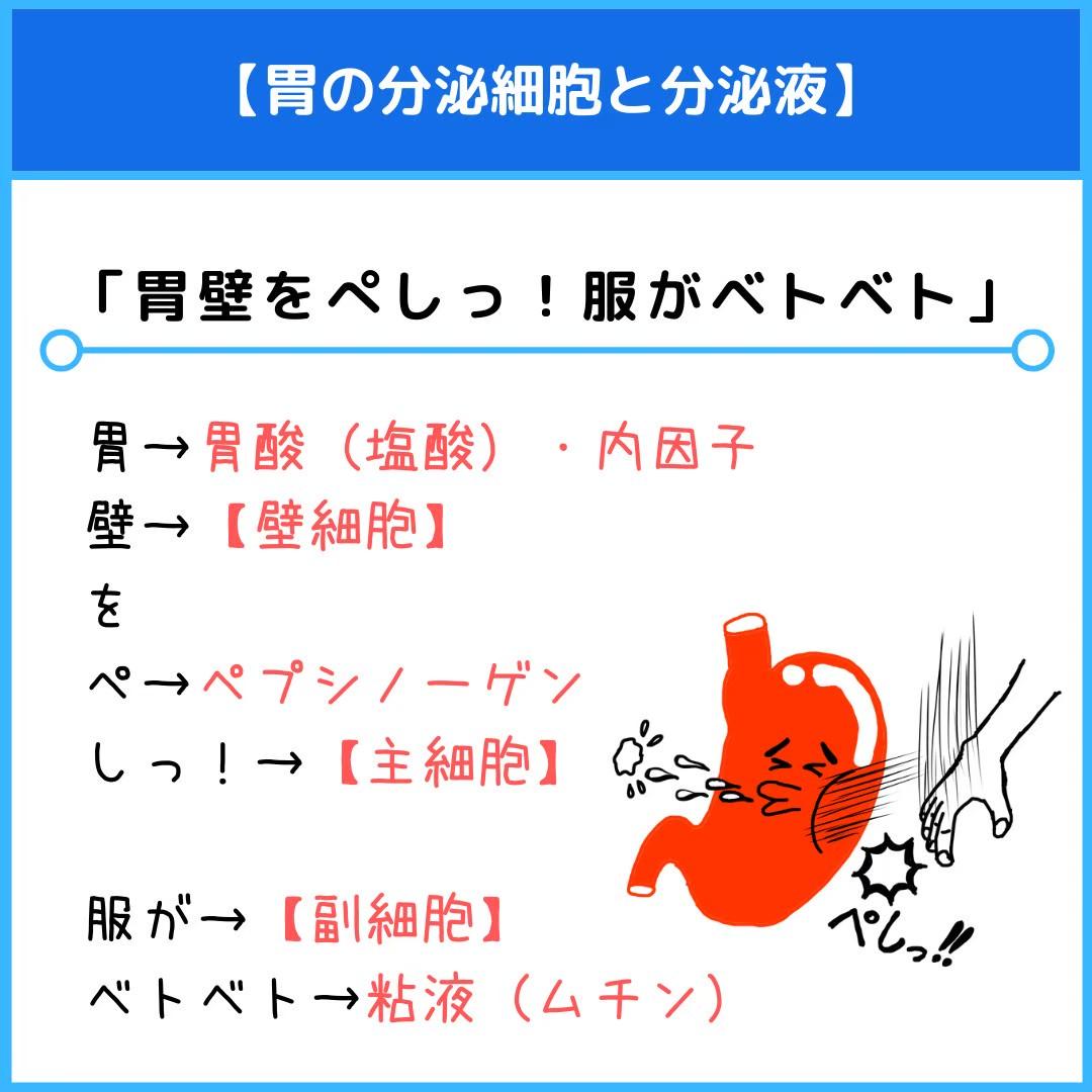 f:id:yakugakun:20210111173705j:plain