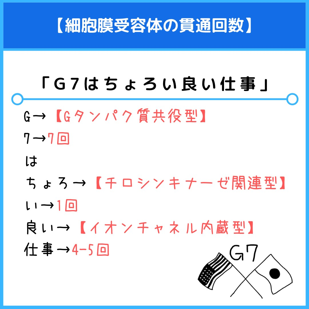 f:id:yakugakun:20210804172640j:plain