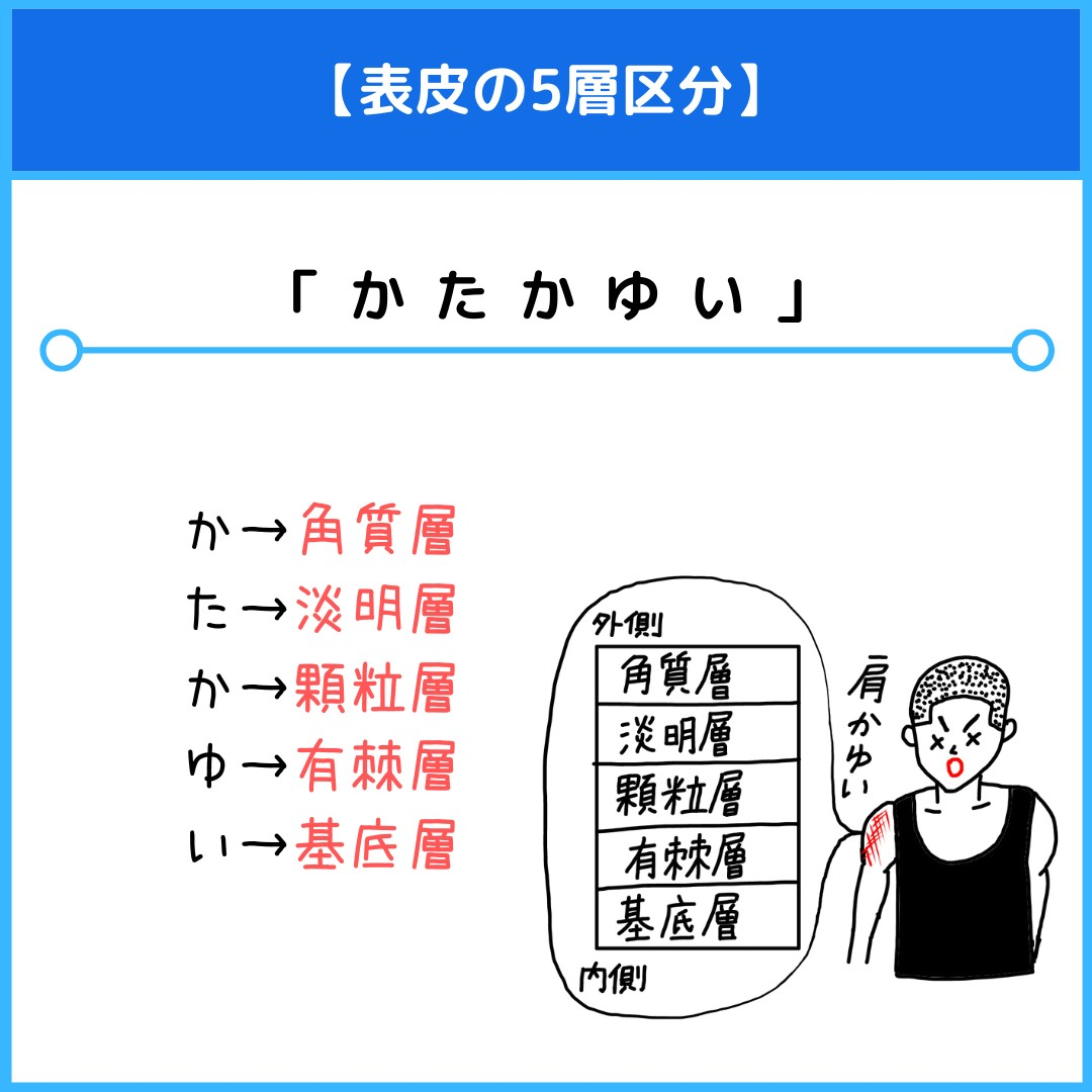 f:id:yakugakun:20210804180804j:plain