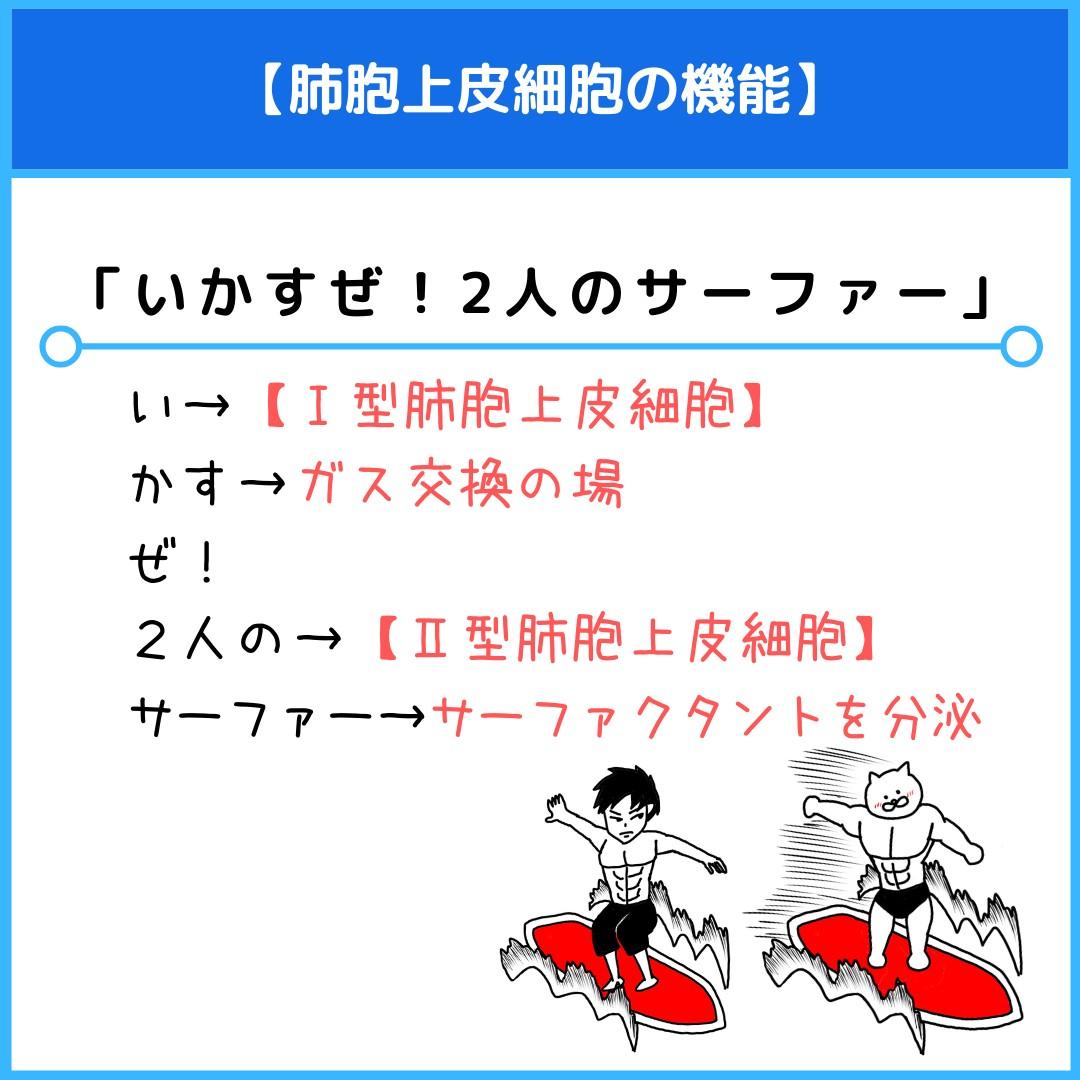 f:id:yakugakun:20210805105317j:plain