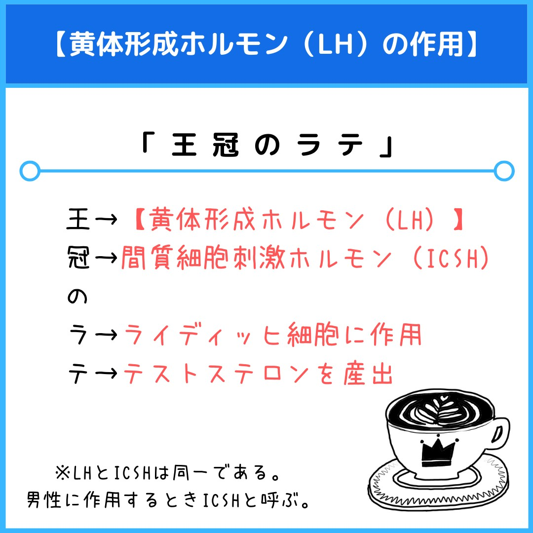 f:id:yakugakun:20210805131932j:plain