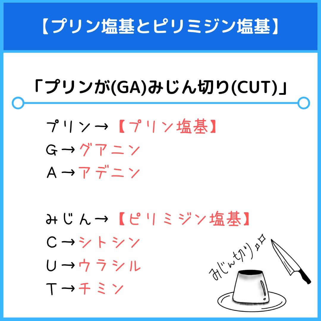 f:id:yakugakun:20210806111340j:plain