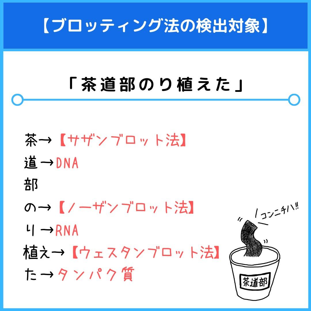 f:id:yakugakun:20210806112702j:plain