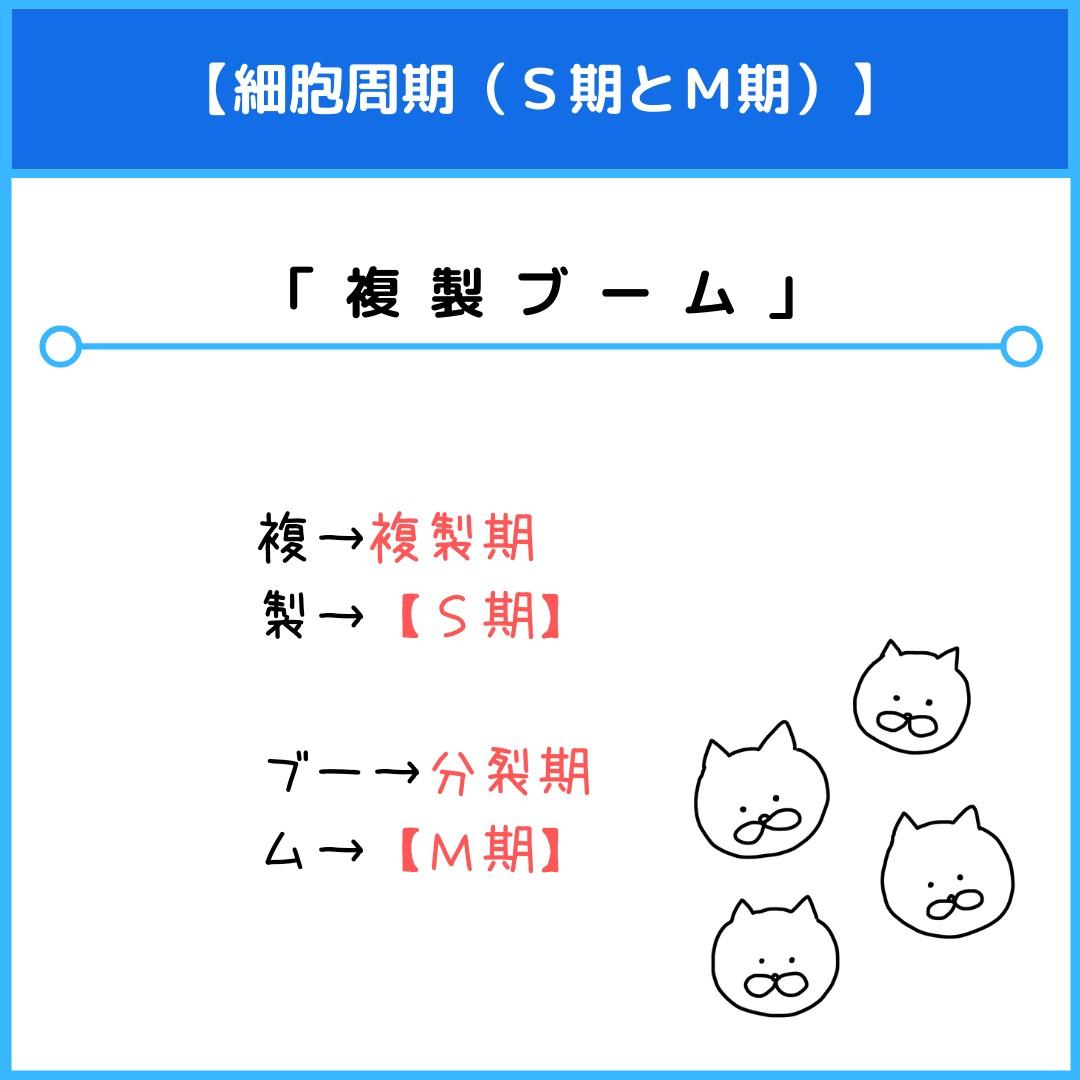 f:id:yakugakun:20210806113518j:plain