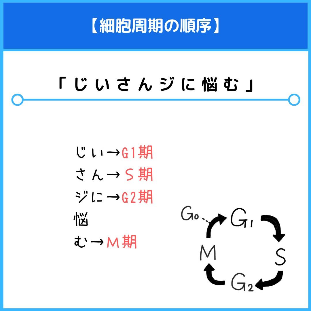 f:id:yakugakun:20210806113807j:plain