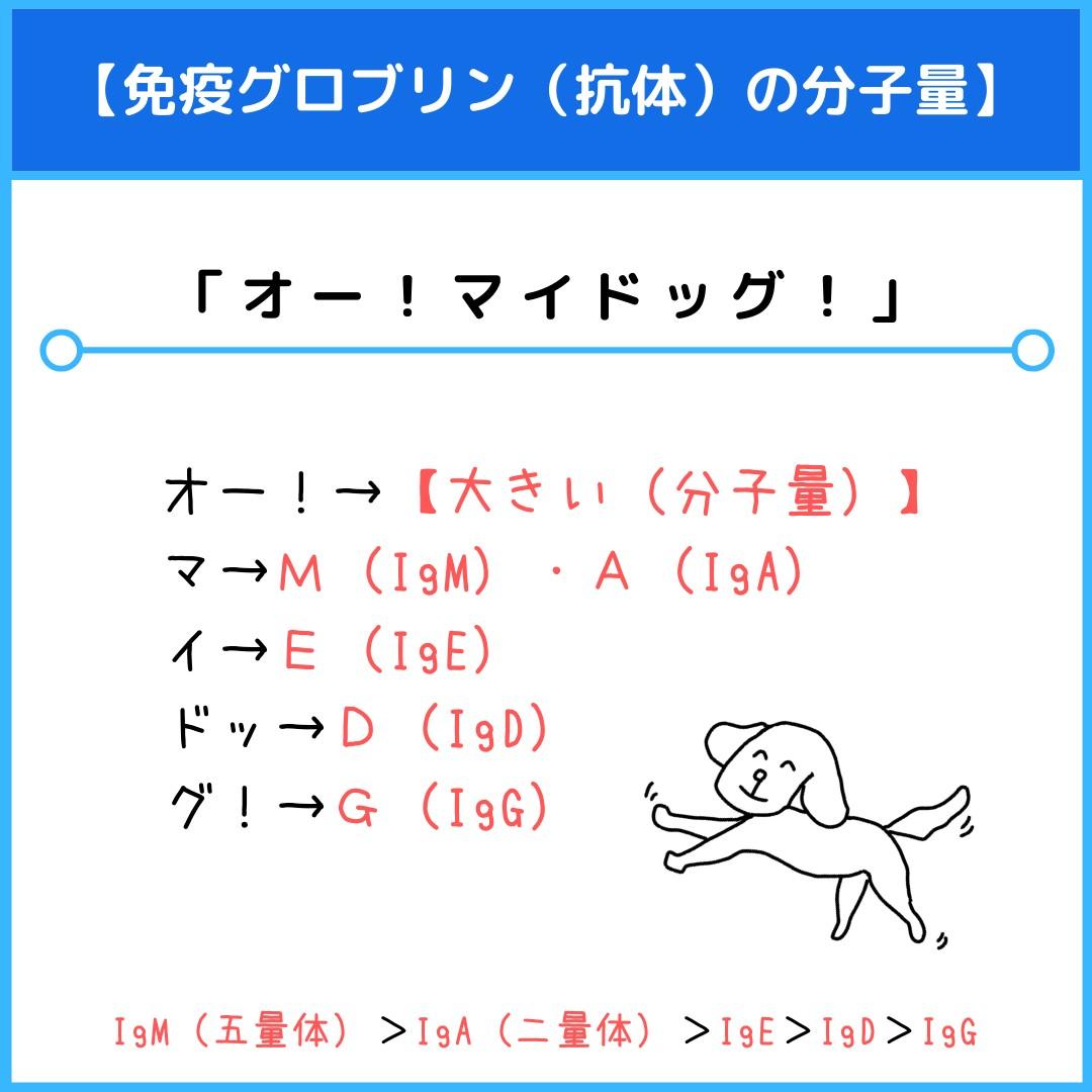 f:id:yakugakun:20210814130646j:plain