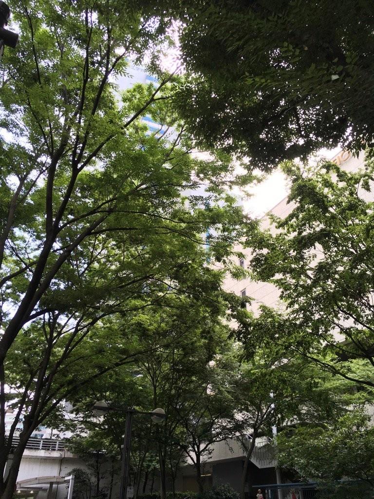 f:id:yakumoizuru:20170728222659j:plain