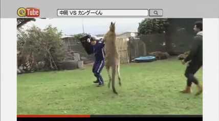 カンガルーとボクシング