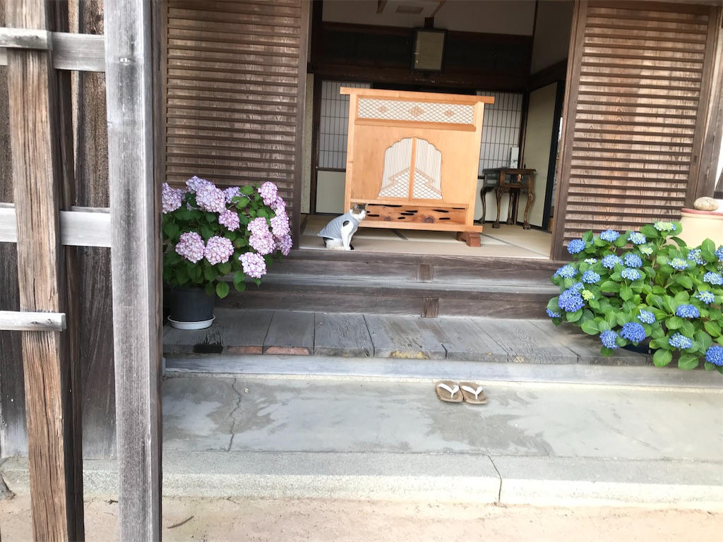 f:id:yakushi252:20180610054552j:image