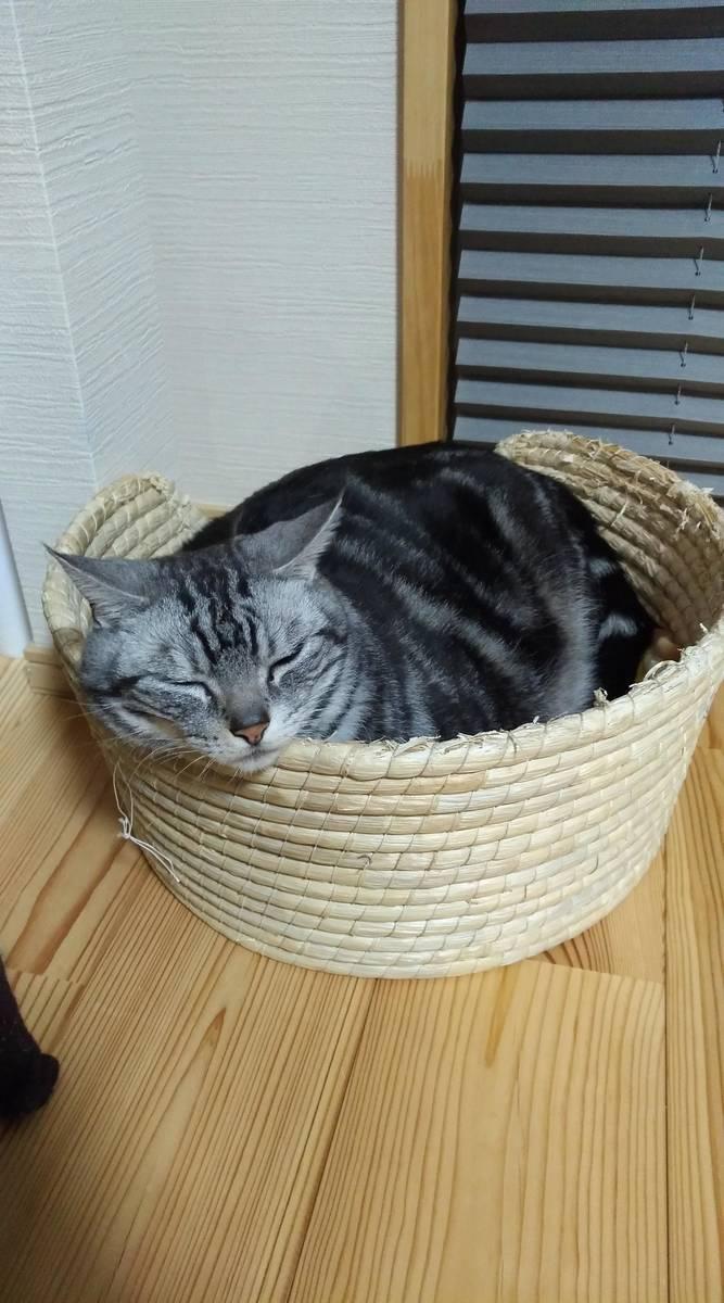 猫の名前 にゃんちゅう