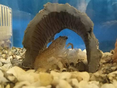 脱皮した殻は栄養分になります
