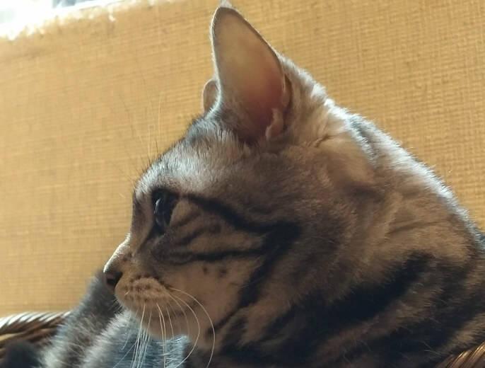 我が家の飼い猫「にゃんちゅう」