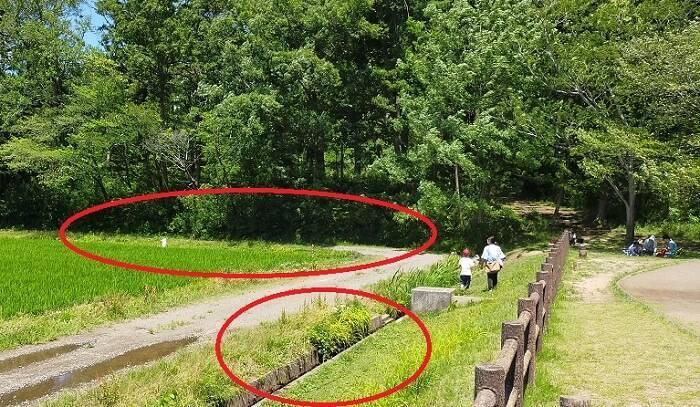 十三塚公園の用水路