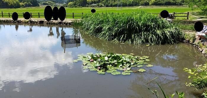 十三塚公園の池