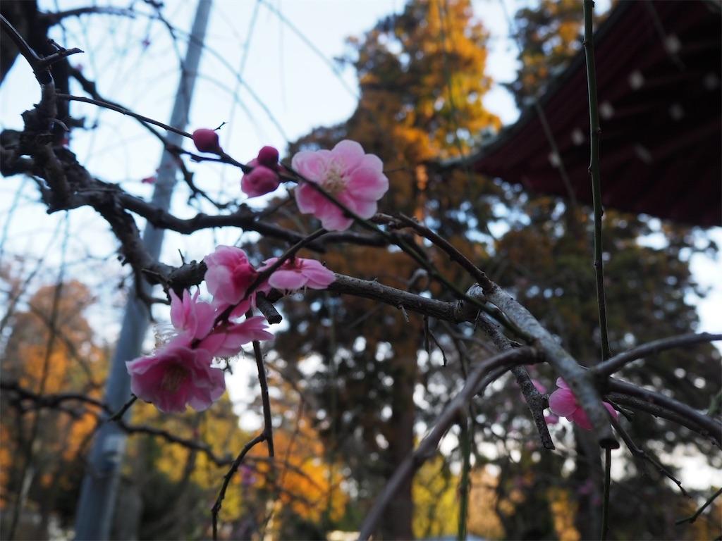 f:id:yama-aruki:20190224150037j:image