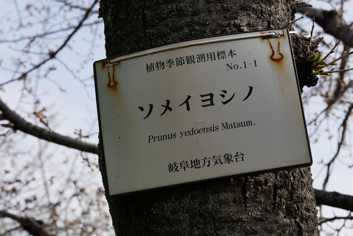 f:id:yama300gifu:20210320140142j:plain