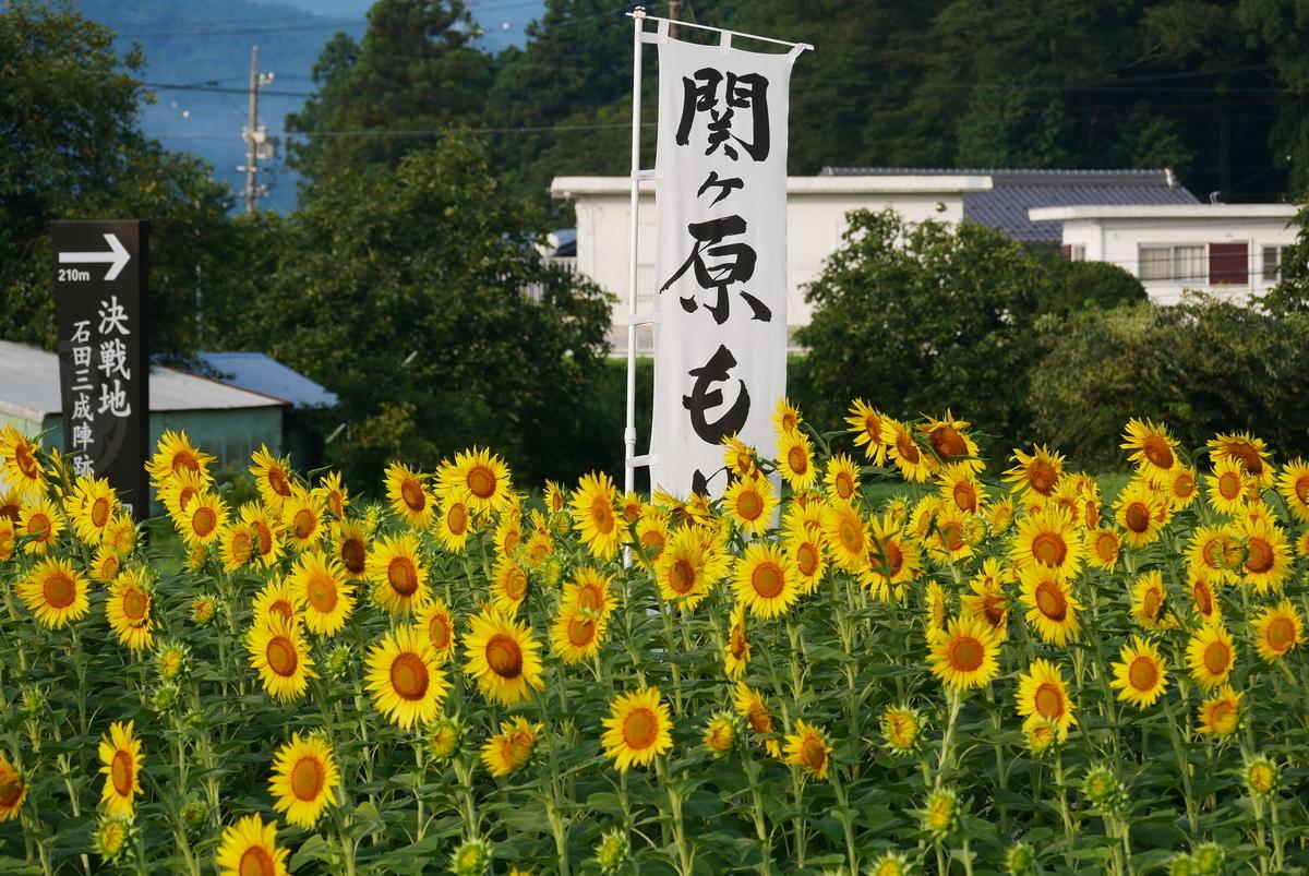 f:id:yama300gifu:20210801203433j:plain