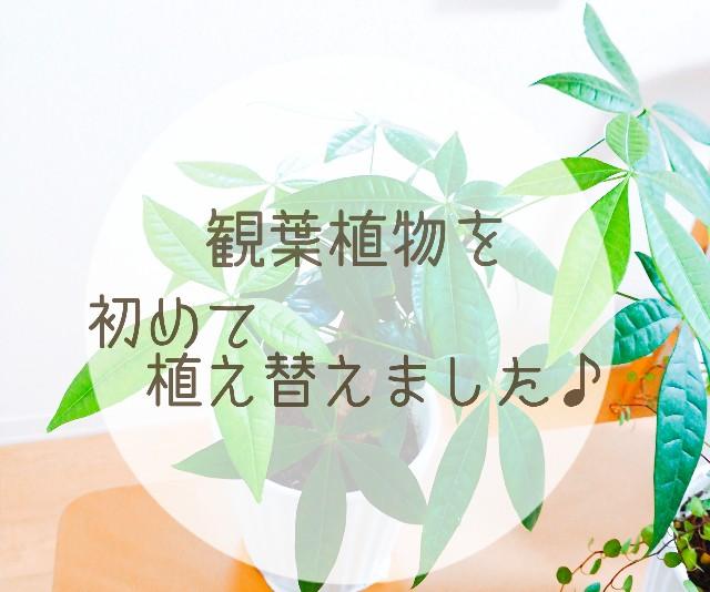 f:id:yama806:20180828155209j:image
