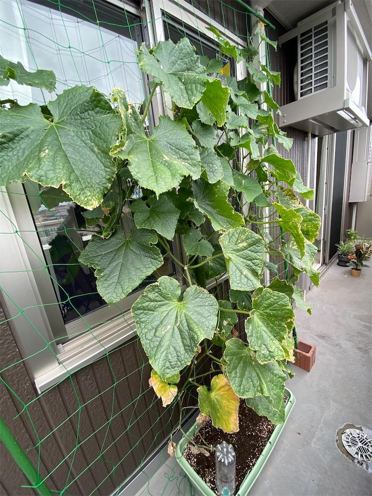 f:id:yamabuki61gou:20210802223248j:image