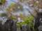 京都新聞写真コンテスト 終春
