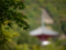 京都新聞写真コンテスト 新緑の中で