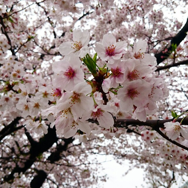 f:id:yamada-e:20170410135630j:image