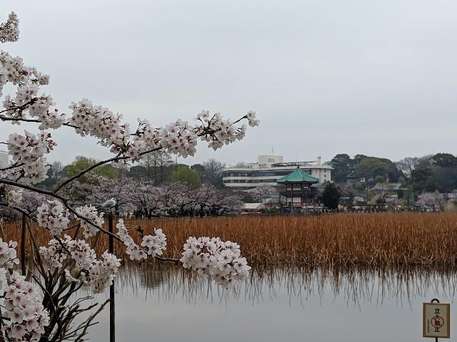 f:id:yamada-e:20190411123021j:image