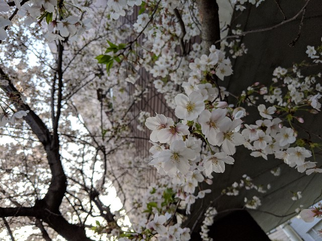 f:id:yamada-e:20190411123212j:image