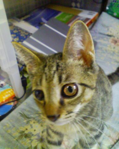 f:id:yamadaatmn:20060812085734j:image