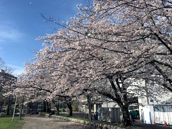 f:id:yamadabushi:20170412102753j:plain