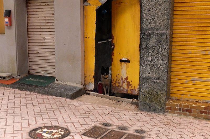 犬のアイバサン