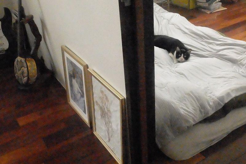 猫が寝転がる