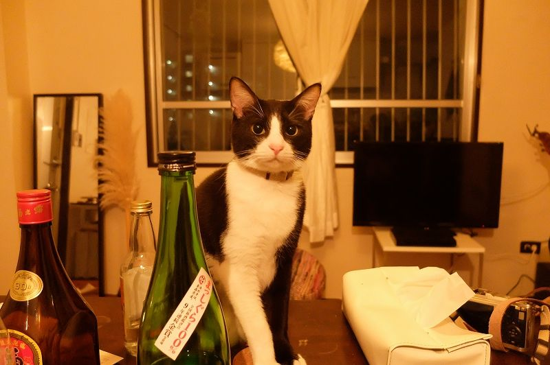 猫の不満げな目