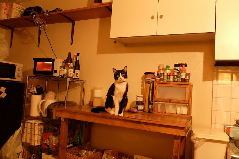 ハチワレ猫のアイバサン