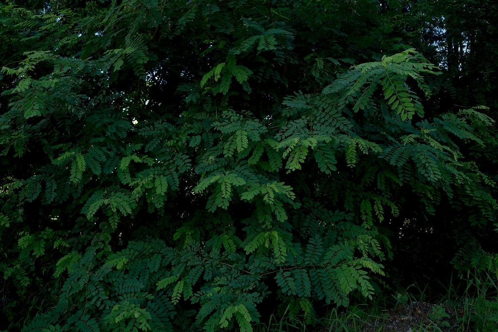 深緑の葉と森