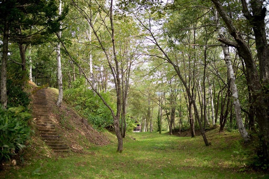 森の中の公園 写真