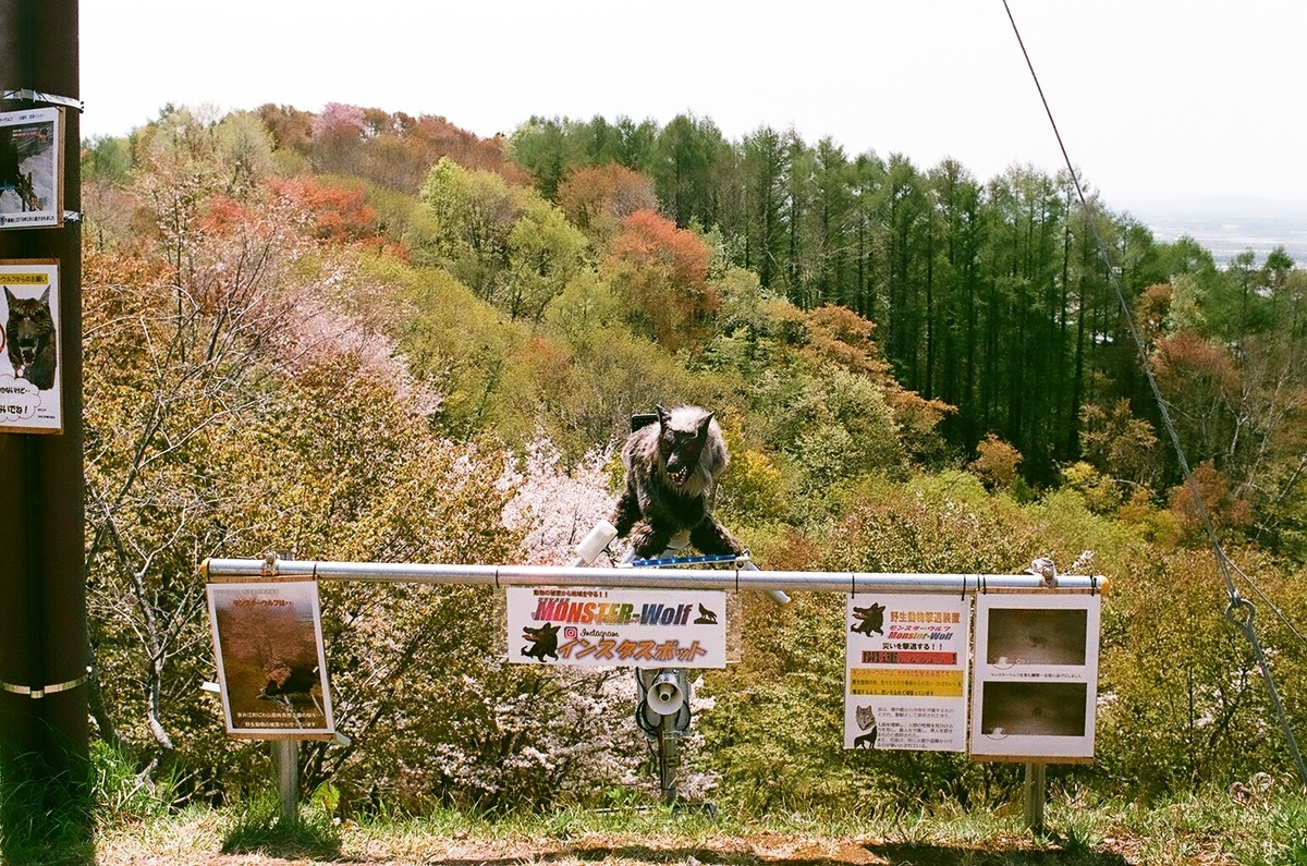 奈井江の桜
