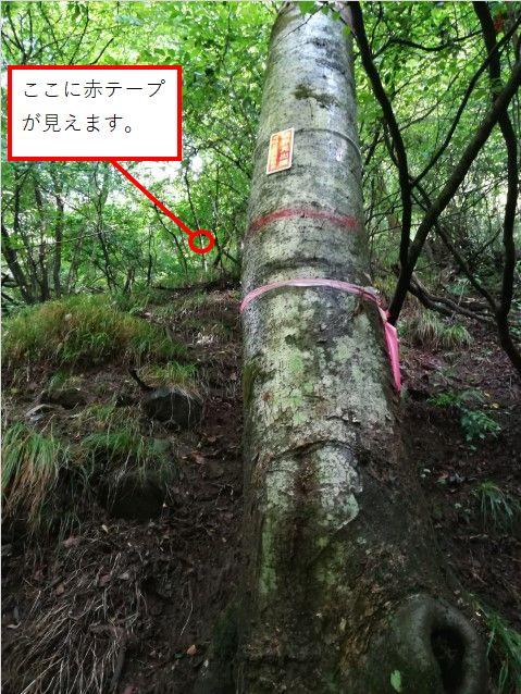 f:id:yamadaken1:20210731145134j:plain