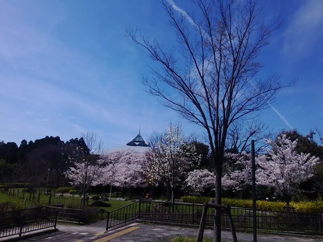 001_公園の桜