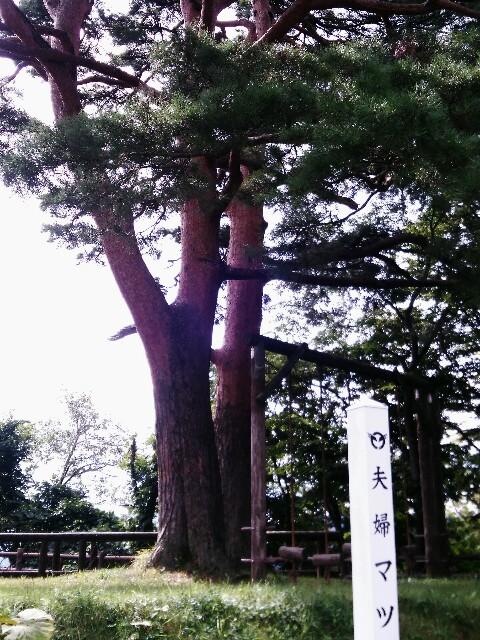 f:id:yamadayukonet:20170916142158j:plain