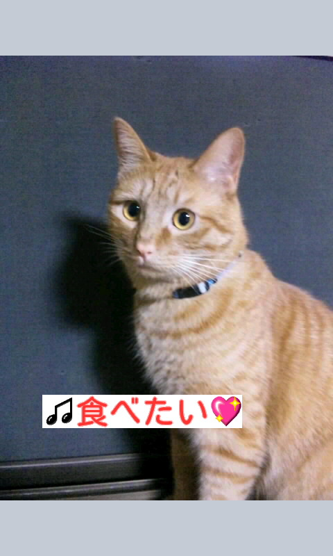 f:id:yamagatamyclus:20100704234319j:image