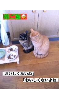 f:id:yamagatamyclus:20110320140753j:image