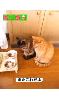 f:id:yamagatamyclus:20110320140832j:image